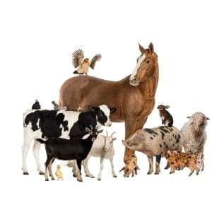 menu shop farm animals store