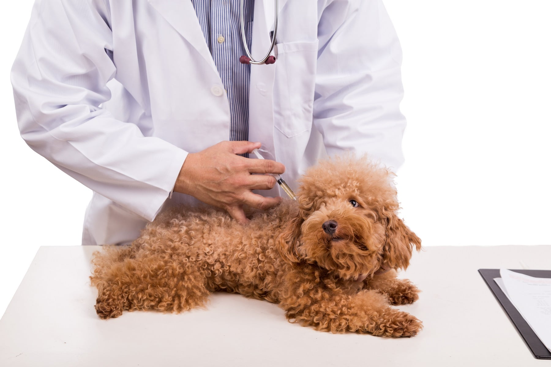 complete puppy vaccination guide and schedule